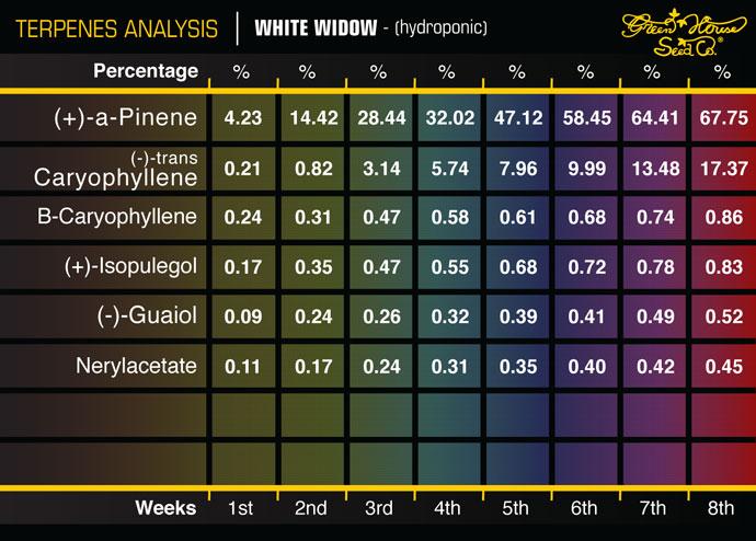 WhiteWidow_H.jpg
